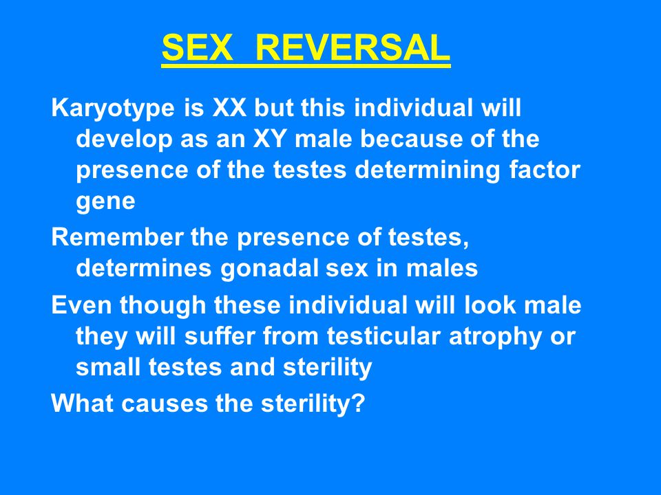 SEX REVERSAL Karyotype is XX but this individual will develop as an XY male because of the presence of the testes determining factor gene.