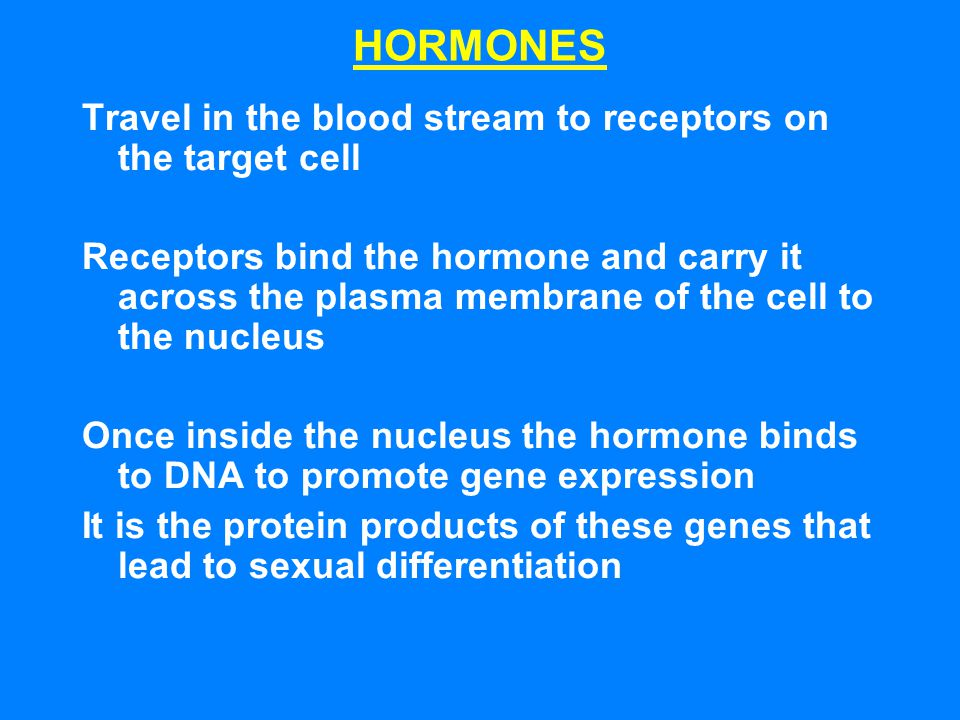 HORMONES Travel in the blood stream to receptors on the target cell