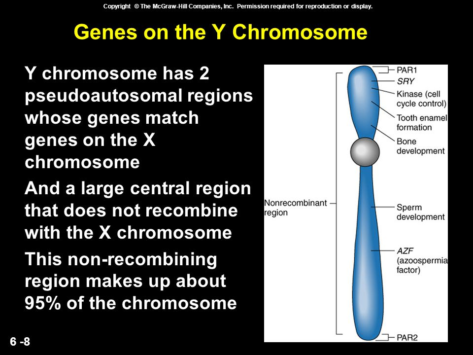 Genes on the Y Chromosome