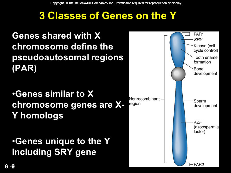 3 Classes of Genes on the Y