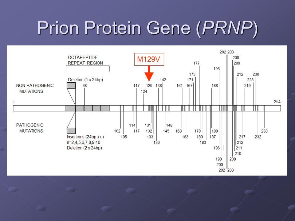 Prion Protein Gene (PRNP)