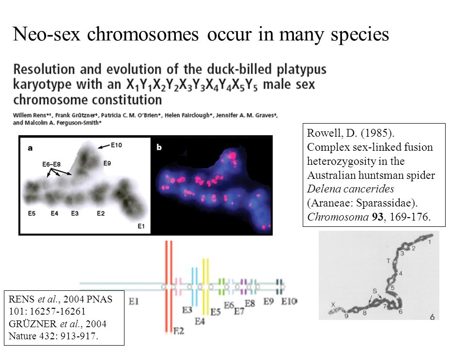 Neo-sex chromosomes occur in many species