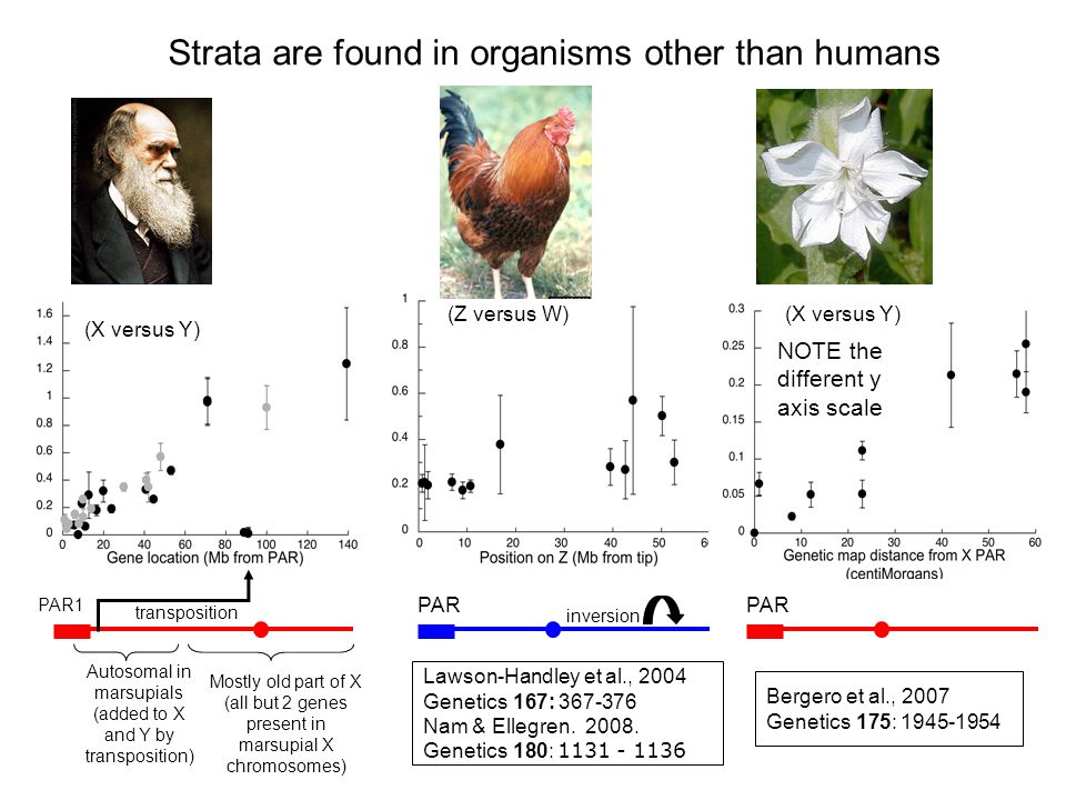 Strata are found in organisms other than humans