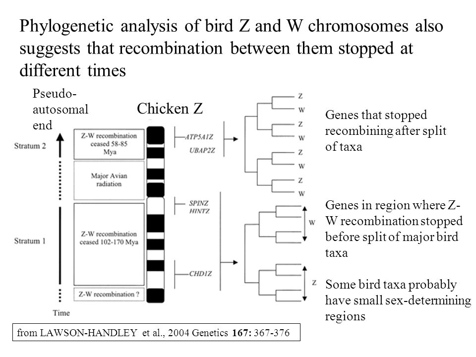 from LAWSON-HANDLEY et al., 2004 Genetics 167: 367-376