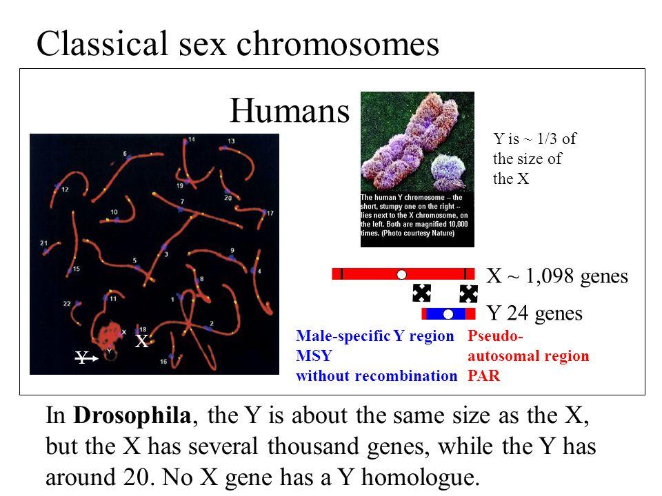 Classical sex chromosomes