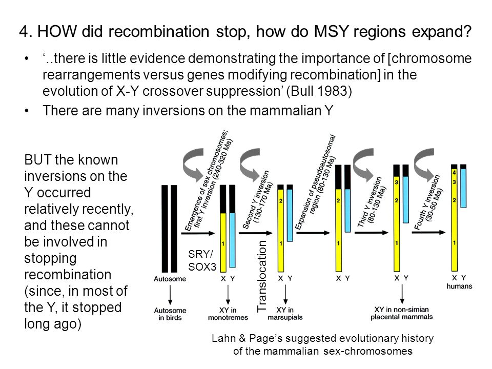 4. HOW did recombination stop, how do MSY regions expand