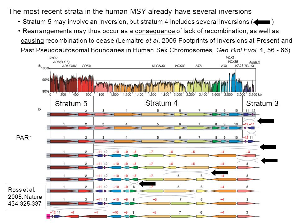 The most recent strata in the human MSY already have several inversions