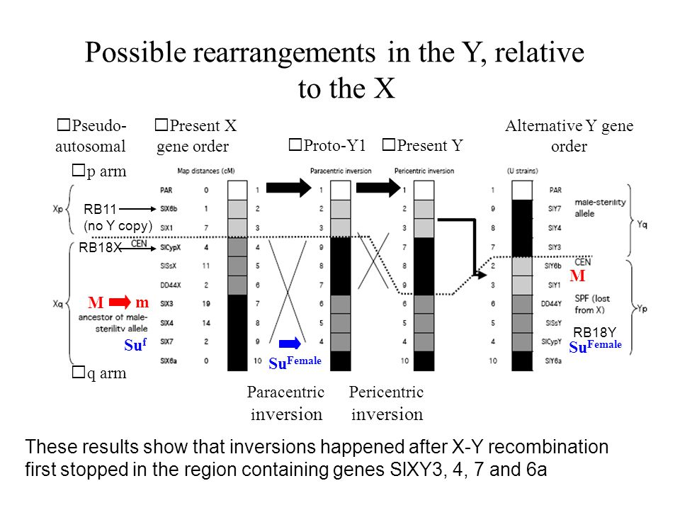 Possible rearrangements in the Y, relative to the X