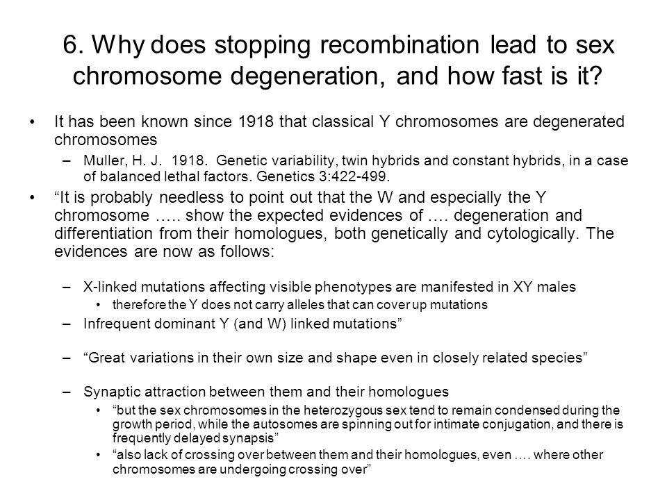 6. Why does stopping recombination lead to sex chromosome degeneration, and how fast is it