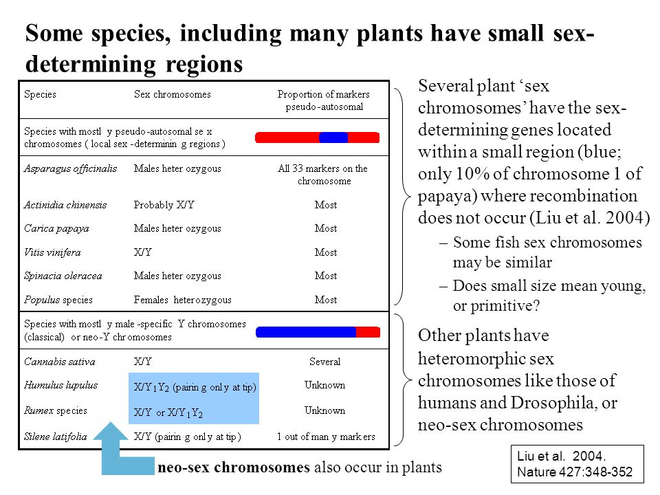 Some species, including many plants have small sex-determining regions