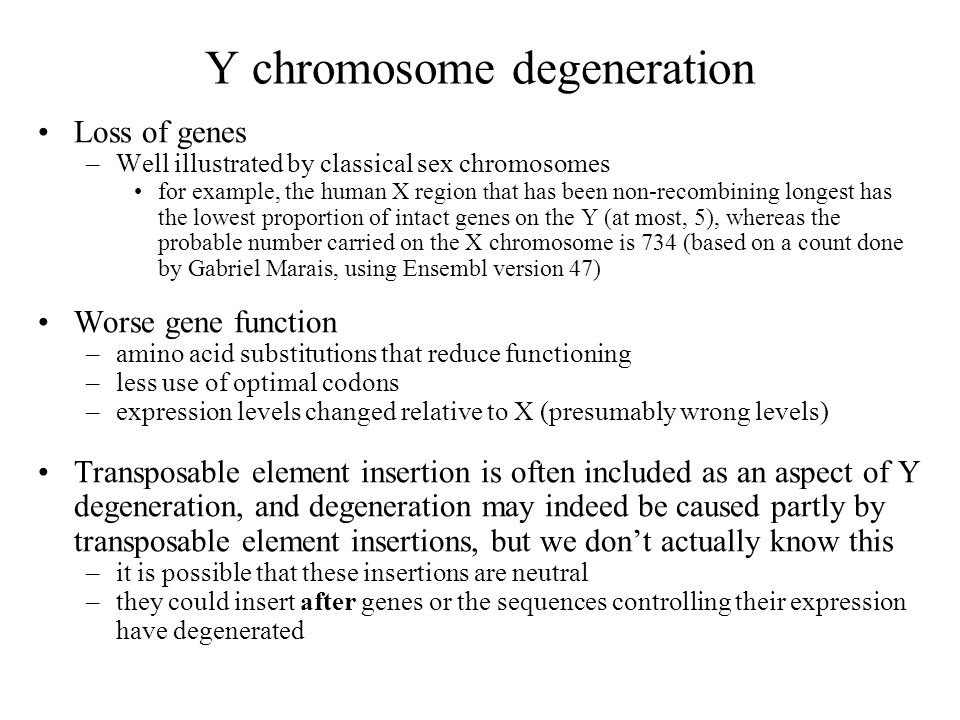 Y chromosome degeneration