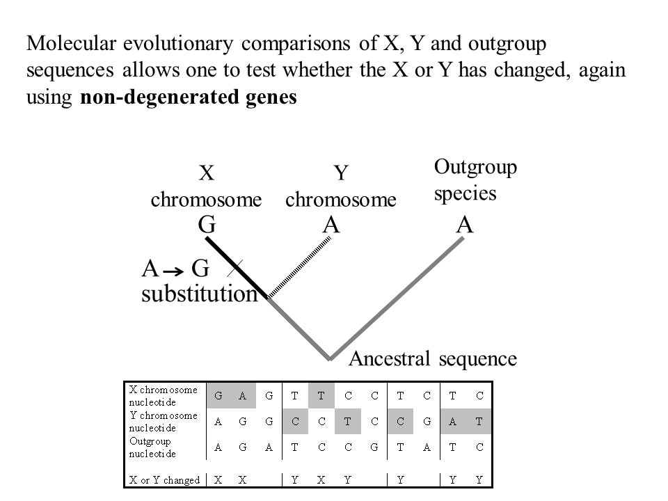 Molecular evolutionary comparisons of X, Y and outgroup sequences allows one to test whether the X or Y has changed, again using non-degenerated genes