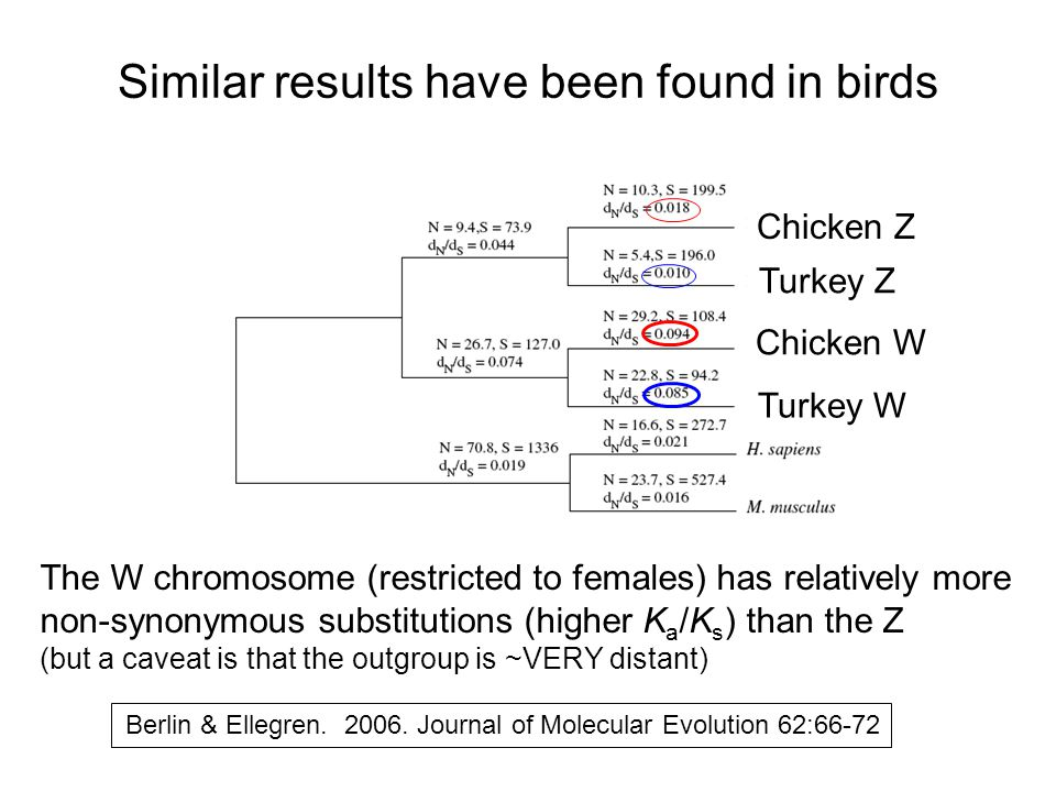 Similar results have been found in birds