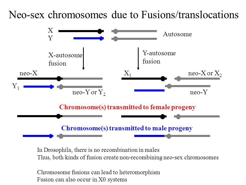 Neo-sex chromosomes due to Fusions/translocations