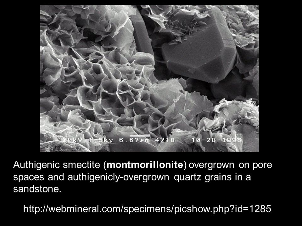 Authigenic smectite (montmorillonite) overgrown on pore spaces and authigenicly-overgrown quartz grains in a sandstone.