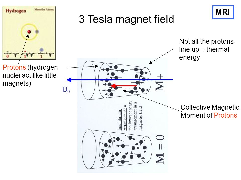 3 Tesla magnet field MRI Not all the protons line up – thermal energy