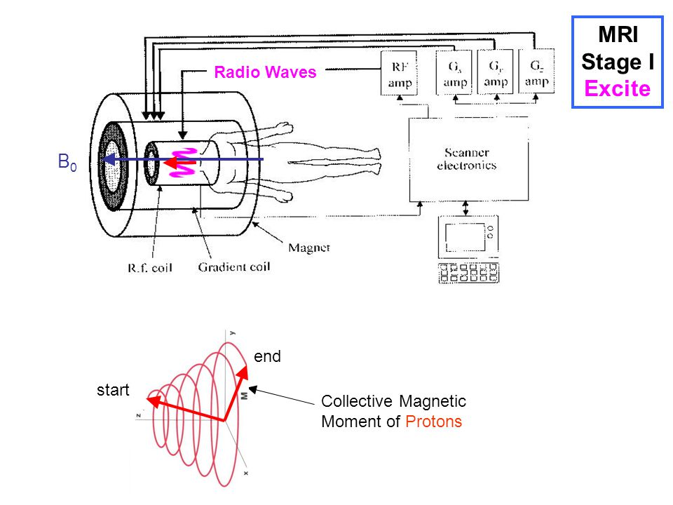 MRI Stage I Excite B0 Radio Waves end start Collective Magnetic