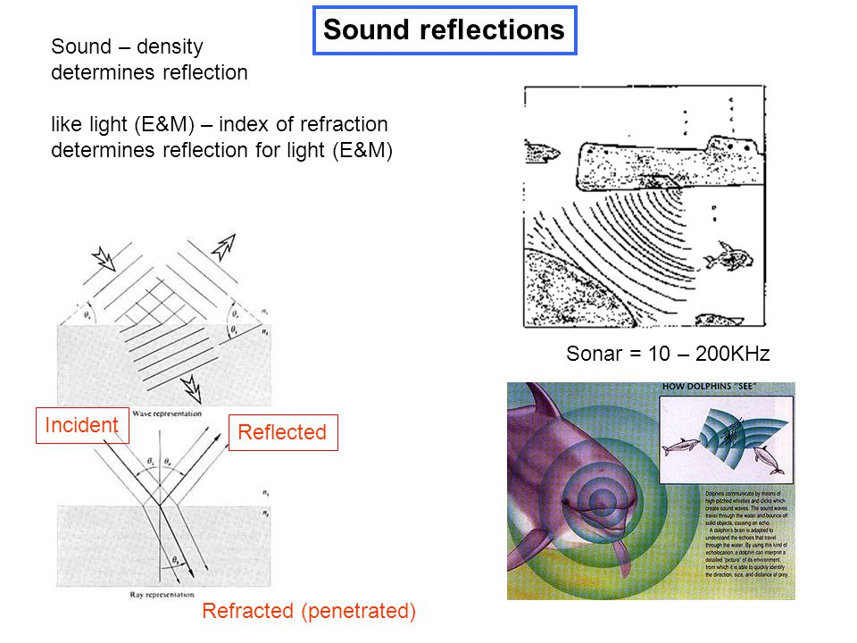 Sound reflections Sound – density determines reflection