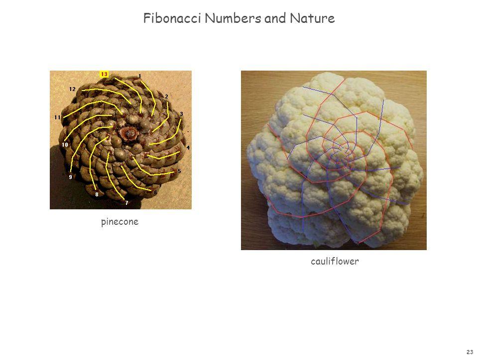 Fibonacci Numbers and Nature
