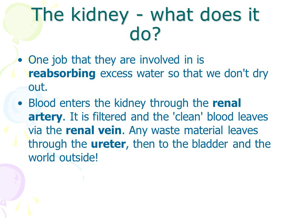 The kidney - what does it do