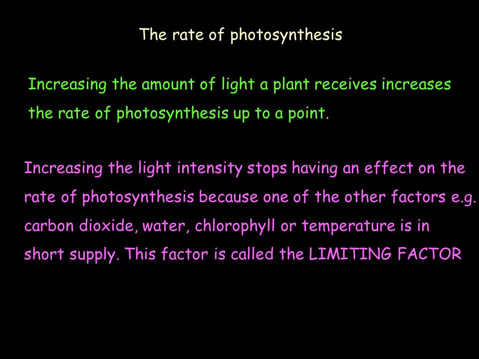 The rate of photosynthesis