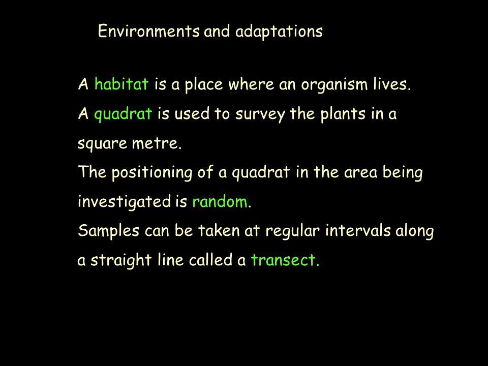 Environments and adaptations