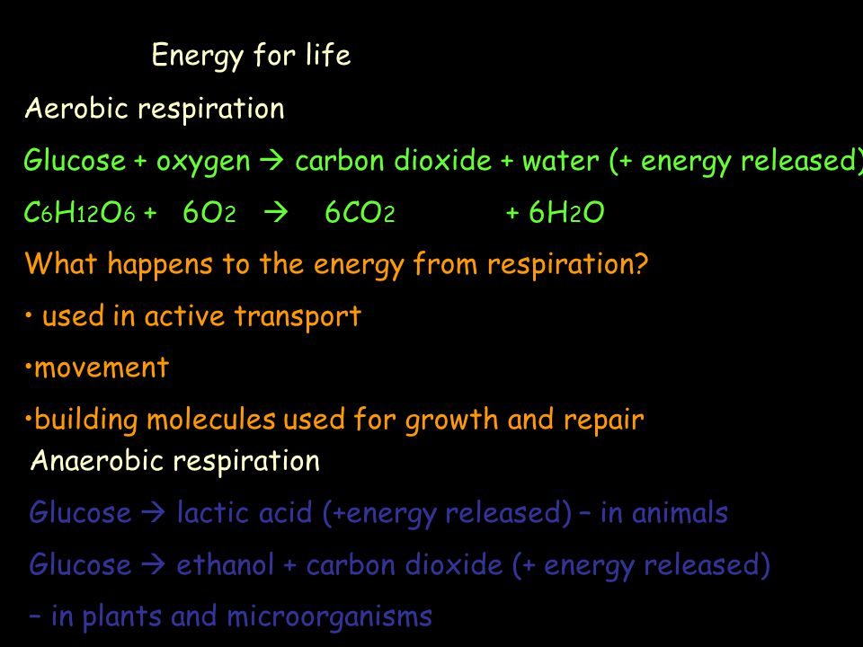 Energy for life Aerobic respiration. Glucose + oxygen  carbon dioxide + water (+ energy released)