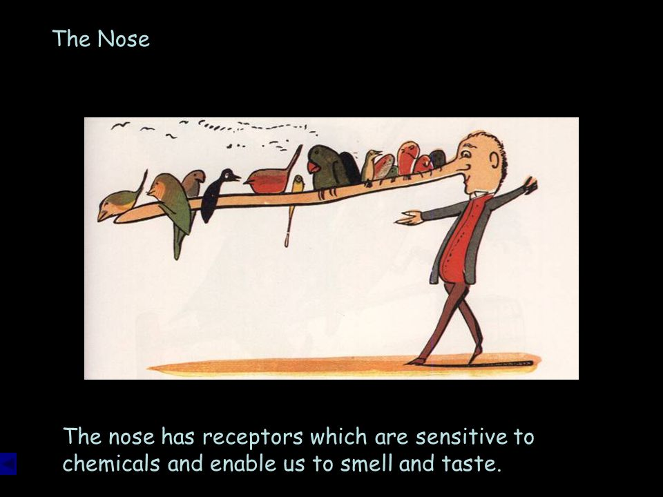 The Nose The nose has receptors which are sensitive to chemicals and enable us to smell and taste.
