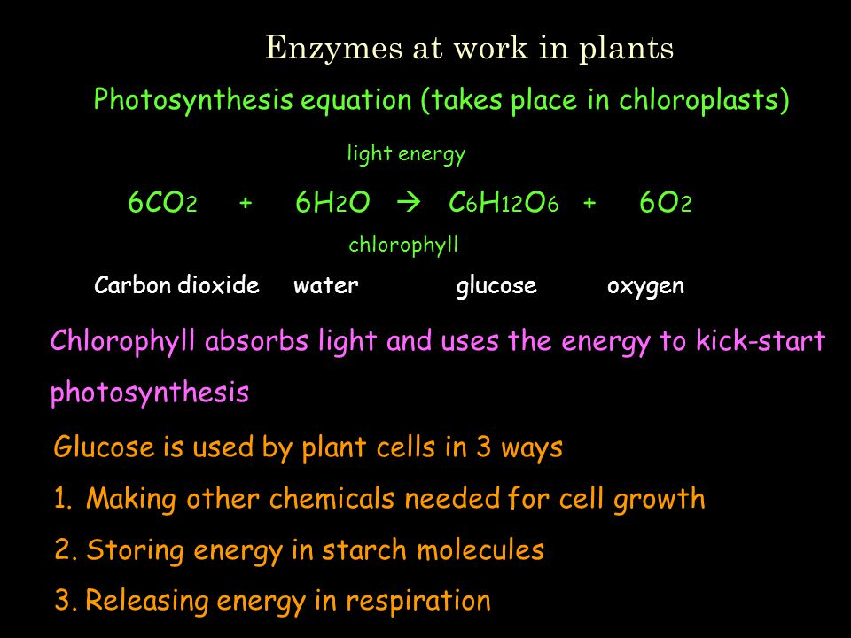 Enzymes at work in plants