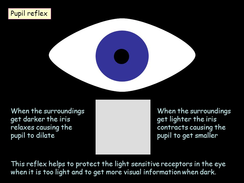 Pupil reflex When the surroundings get darker the iris relaxes causing the pupil to dilate.