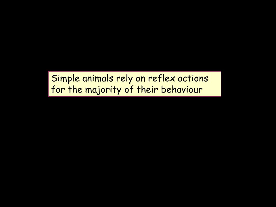 Simple animals rely on reflex actions for the majority of their behaviour