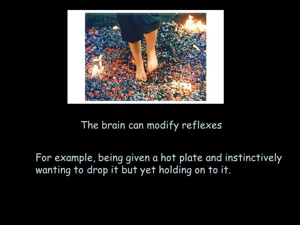 The brain can modify reflexes