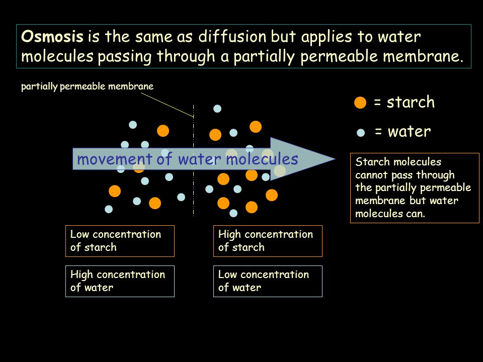 movement of water molecules