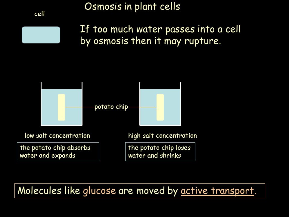If too much water passes into a cell by osmosis then it may rupture.
