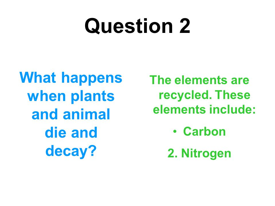 Question 2 What happens when plants and animal die and decay