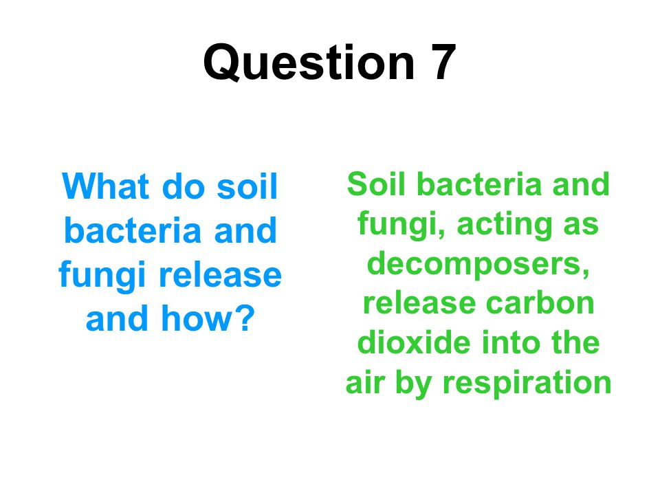 What do soil bacteria and fungi release and how