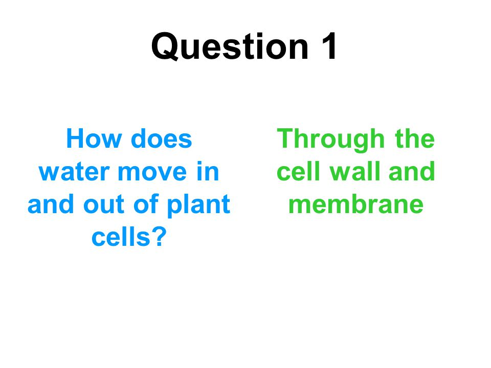 Question 1 How does water move in and out of plant cells