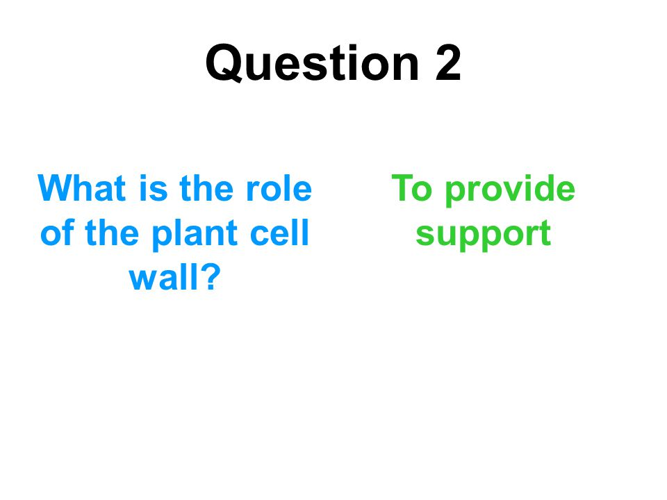 What is the role of the plant cell wall