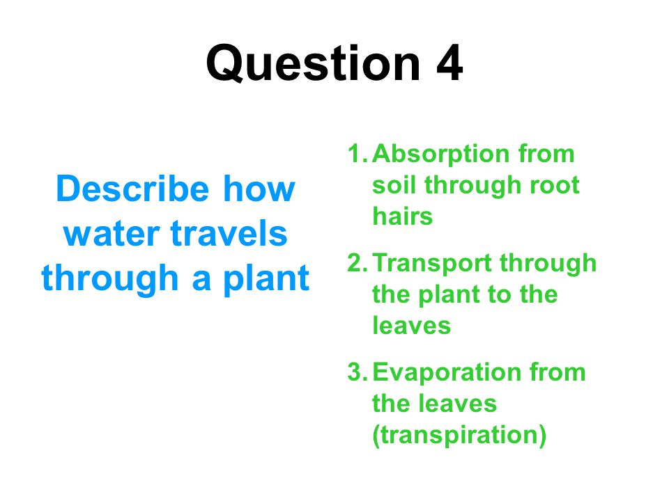 Describe how water travels through a plant