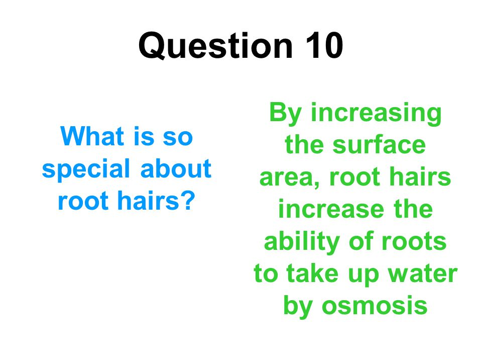 What is so special about root hairs