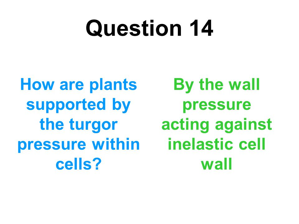 Question 14 How are plants supported by the turgor pressure within cells.