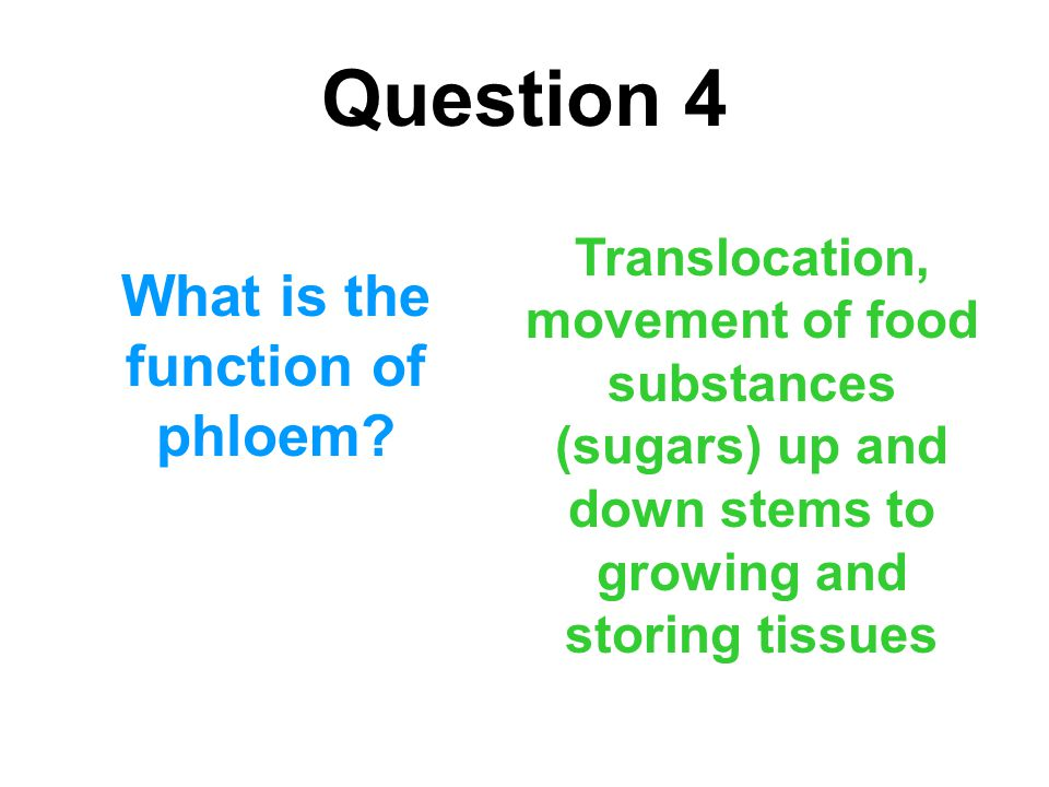 What is the function of phloem