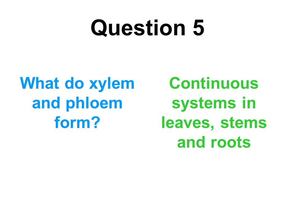 Question 5 What do xylem and phloem form