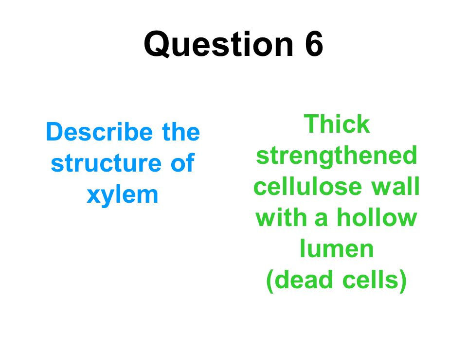 Question 6 Thick strengthened cellulose wall with a hollow lumen (dead cells) Describe the structure of xylem.