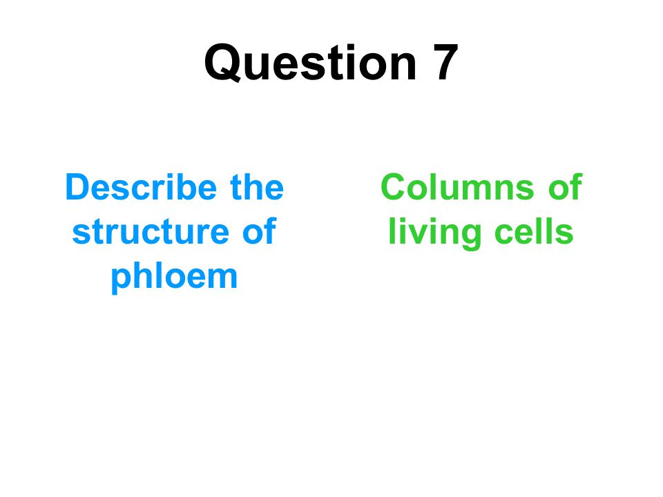 Describe the structure of phloem Columns of living cells