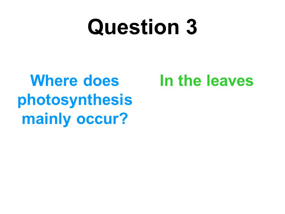 Where does photosynthesis mainly occur
