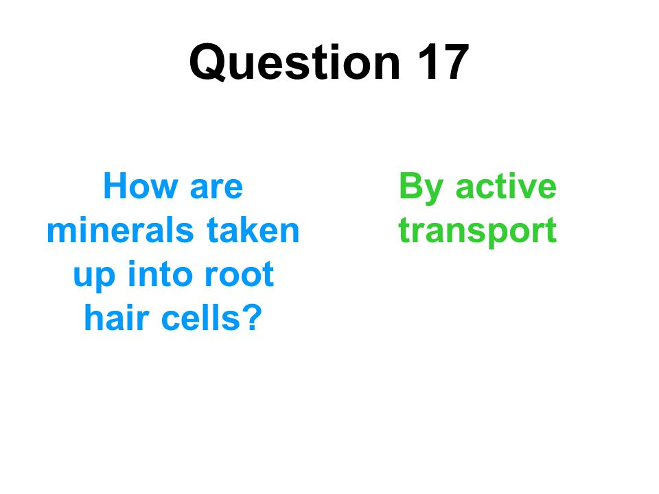 How are minerals taken up into root hair cells