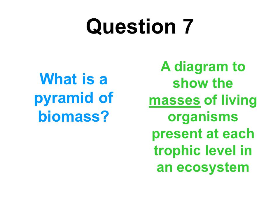 What is a pyramid of biomass