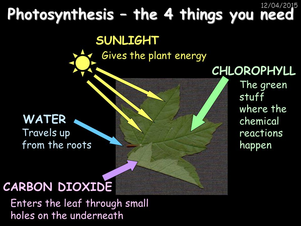 Photosynthesis – the 4 things you need