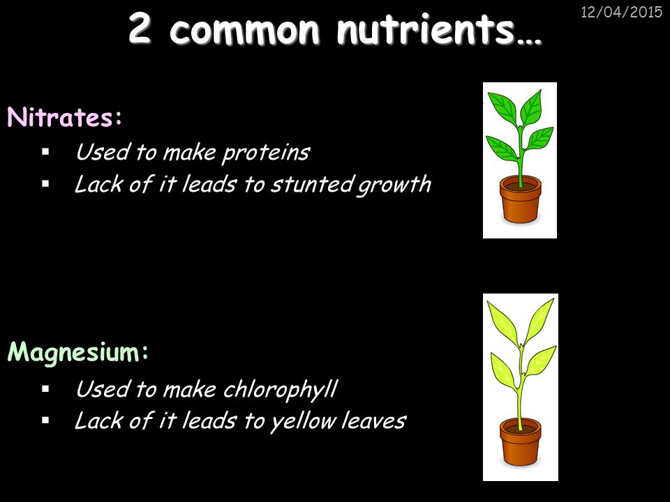 2 common nutrients… Nitrates: Magnesium: Used to make proteins